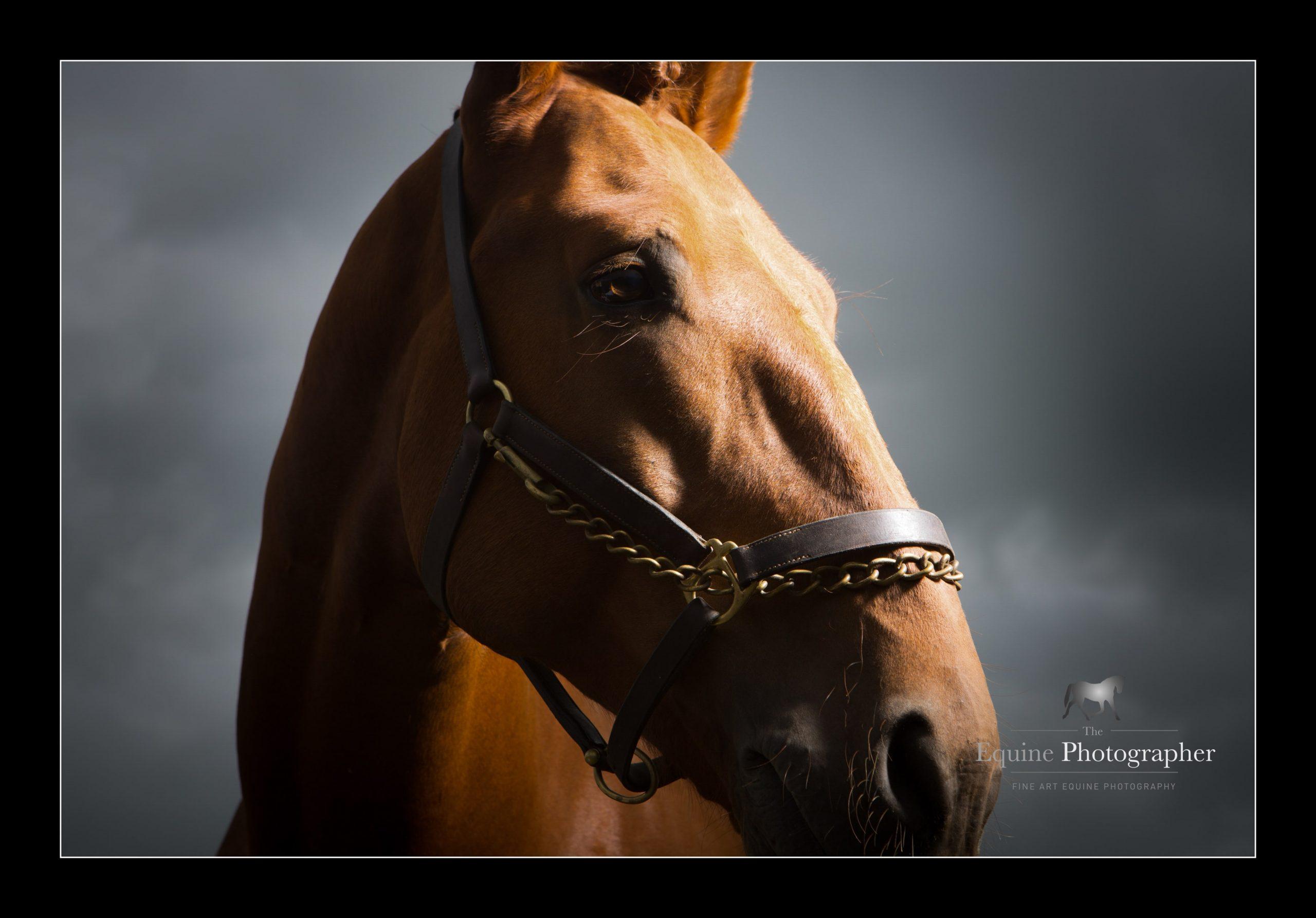 horse_portrait_equine_013-min
