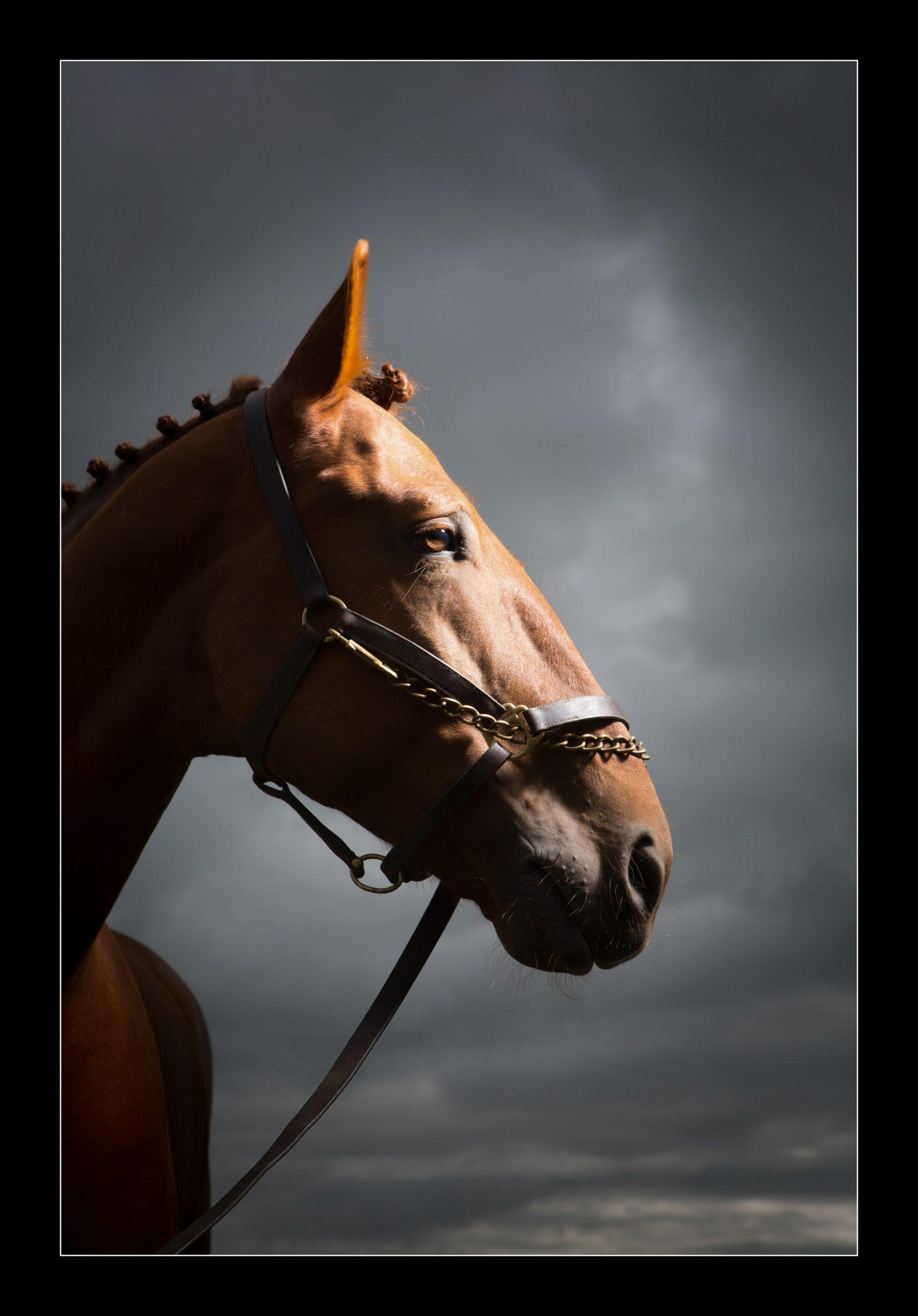 equine-6166 copy-min