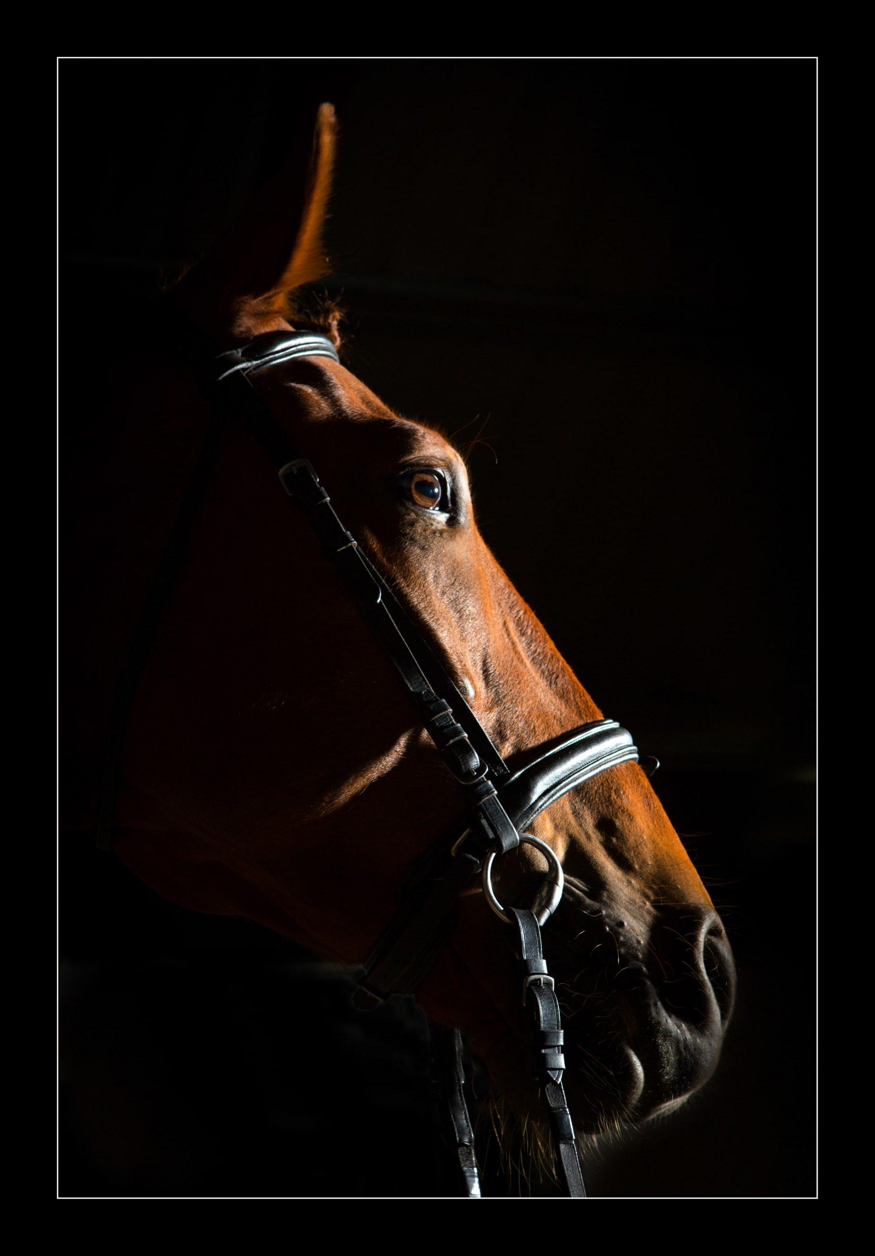 equine-6396 copy-min