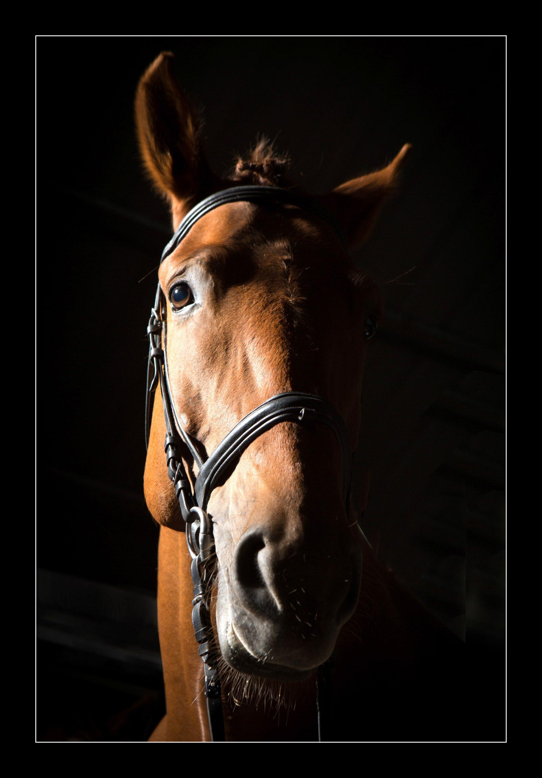 equine-6401 copy-min