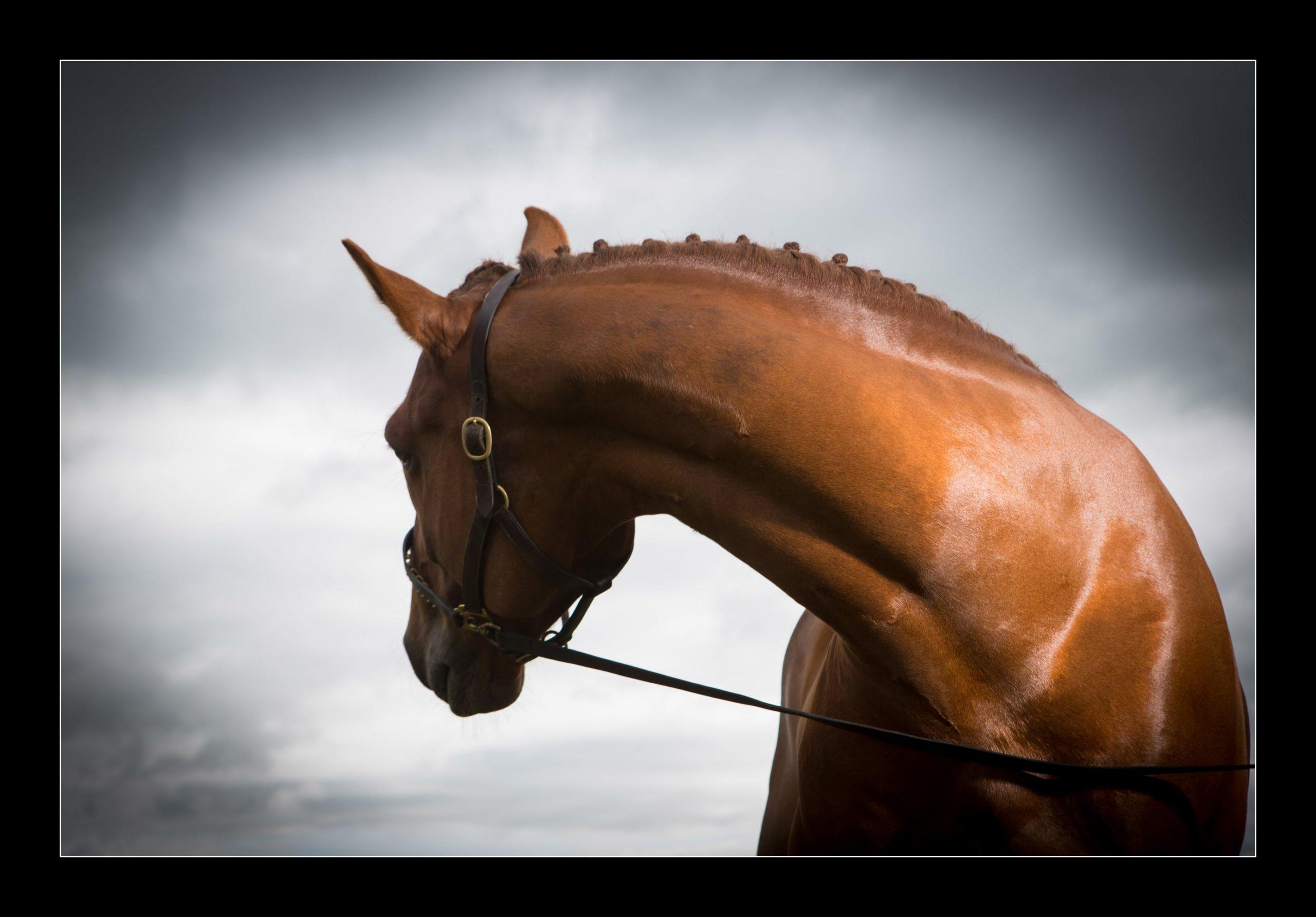 horse_portrait_equine_007-min