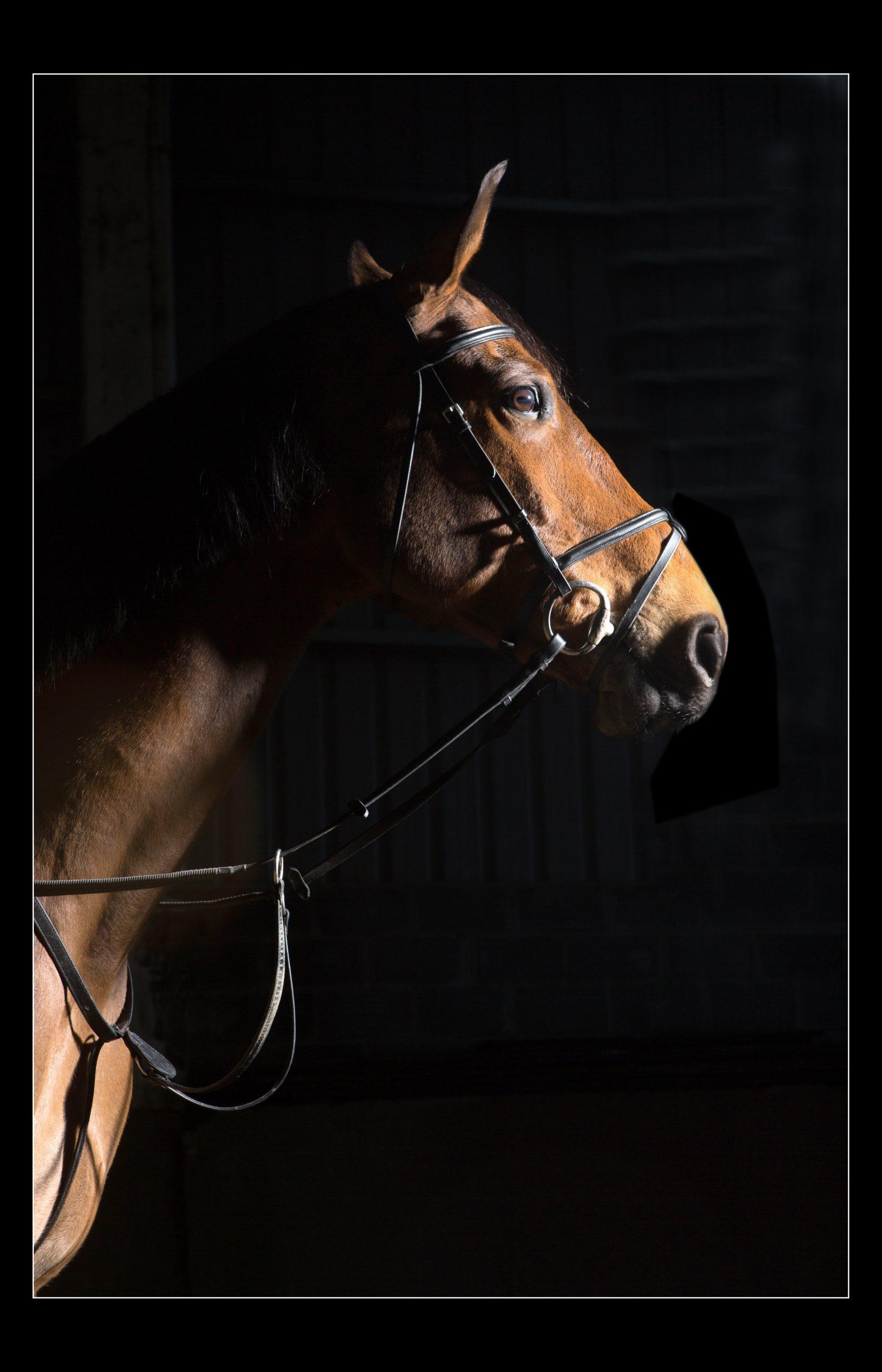 horse_portrait_equine_035-min