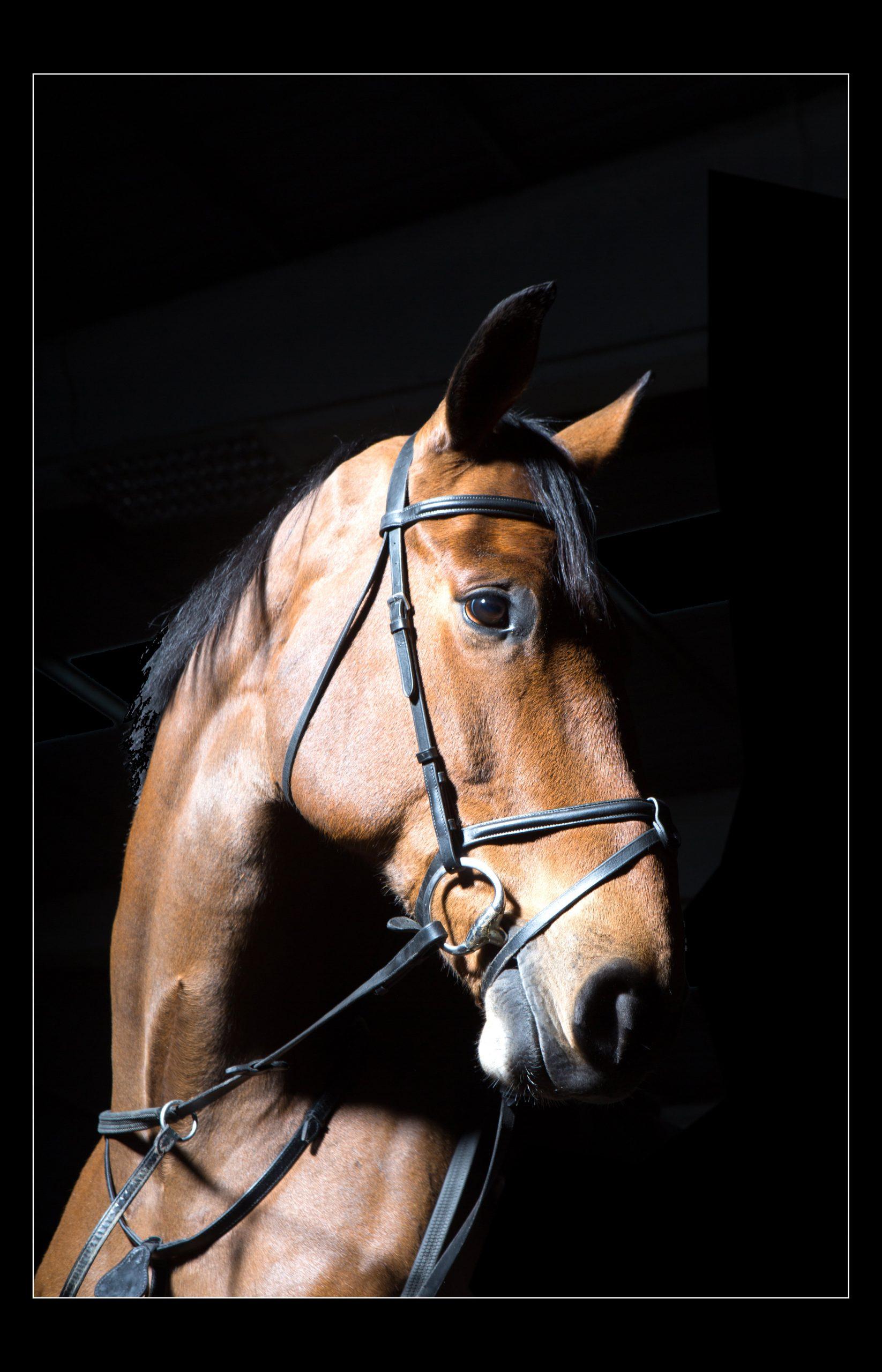 horse_portrait_equine_036-min
