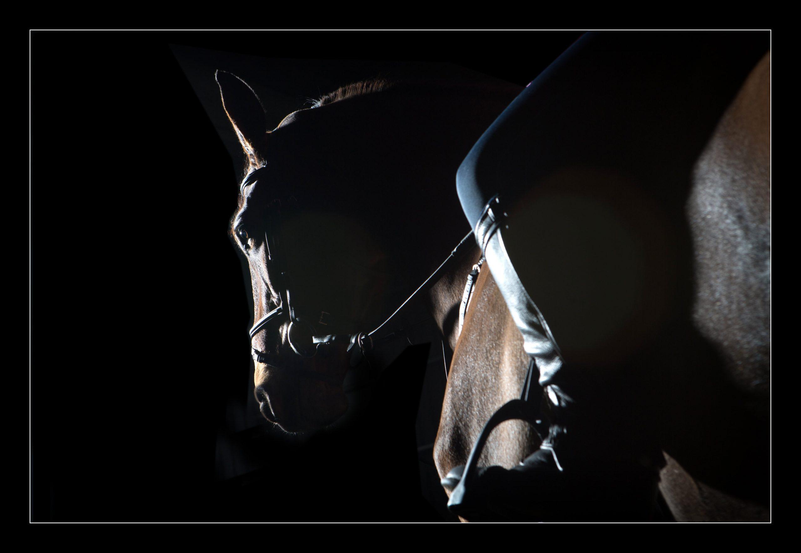 horse_portrait_equine_045-min