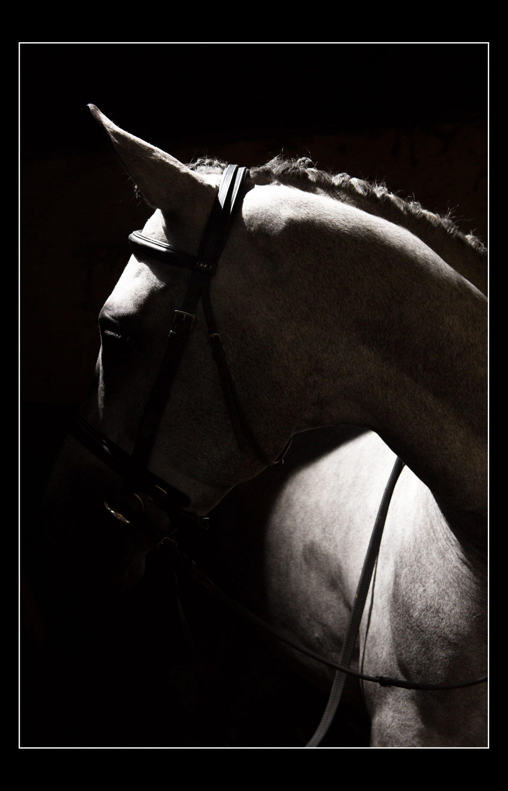 horse_portrait_equine_070-min